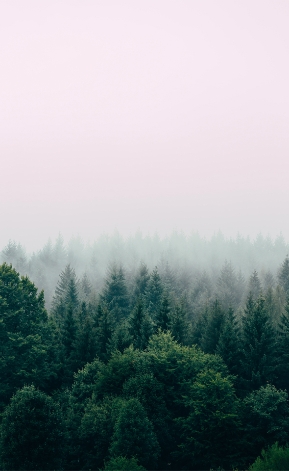 Diaporama Forêts de Liffol France